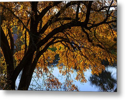 Golden Autumn Leaves Metal Print by Garry Gay