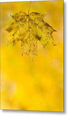 Golden Autumn Metal Print by Sebastian Musial