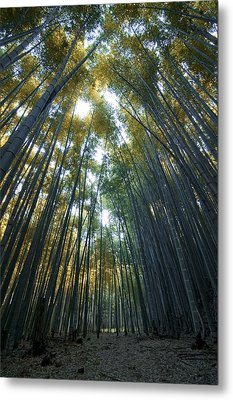 Golden Bamboo Forest Metal Print by Aaron Bedell