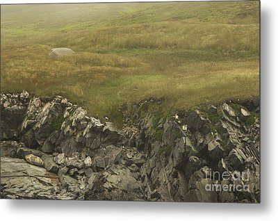 Golden Barrens Metal Print by Chris Holmes
