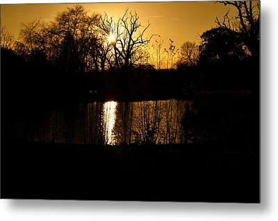Golden Brown Metal Print by Dave Woodbridge