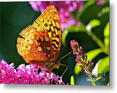 Golden Butterfly Metal Print by Jay Nodianos