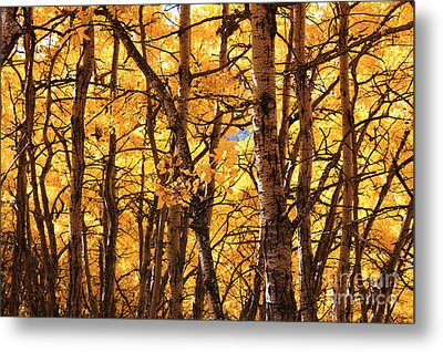Golden Canopy Metal Print by Gerry Bates