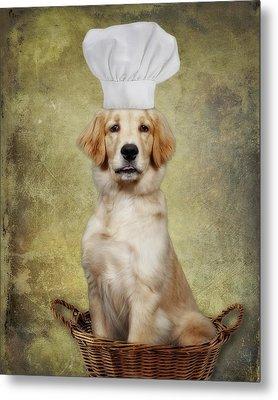 Golden Chef Metal Print by Susan Candelario