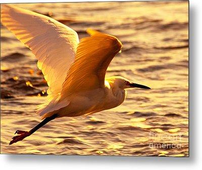 Golden Egret Bird Nature Fine Photography Yellow Orange Print  Metal Print