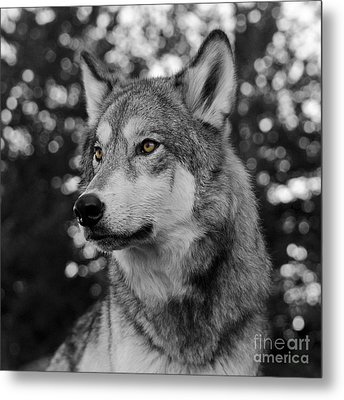 Golden Eyes Metal Print by Dee Cresswell