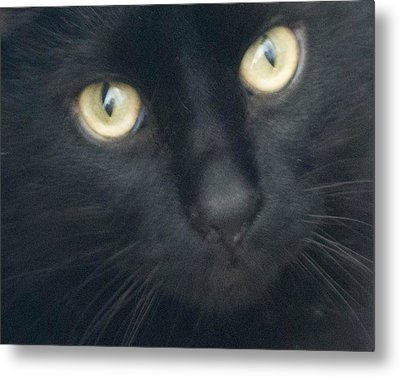 Golden Eyes Metal Print by Rhonda Humphreys