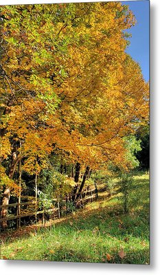 Metal Print featuring the photograph Golden Fenceline by Gordon Elwell