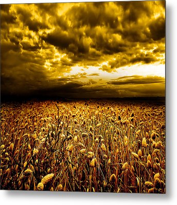 Golden Fields Metal Print by Jacky Gerritsen