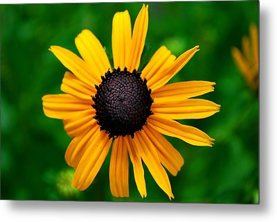 Golden Flower Metal Print by Matt Harang