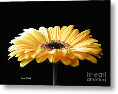 Golden Gerbera Daisy No 2 Metal Print
