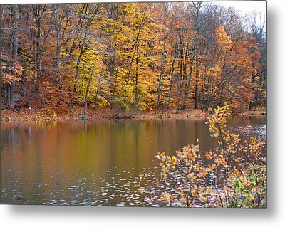 Golden Glory Metal Print by A New Focus Photography