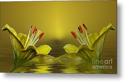 Metal Print featuring the photograph Golden Glow by Shirley Mangini