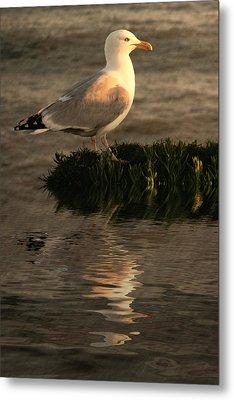 Golden Gull Metal Print by Sharon Lisa Clarke