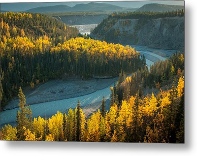 Golden Highlights Metal Print by Roger Clifford