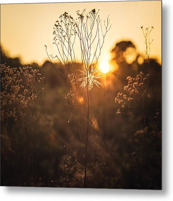 Golden Hour  Metal Print by Maria Robinson