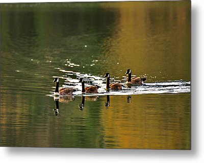 Golden Lake Metal Print by Menachem Ganon