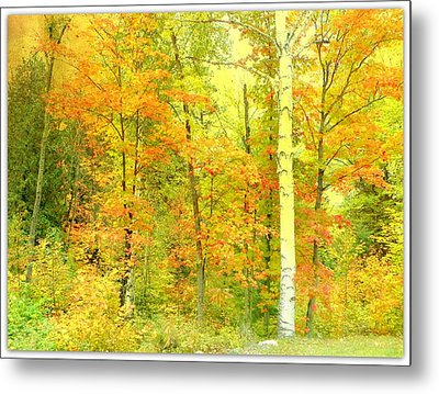 Golden Leaves  Metal Print by Dianne  Lacourciere