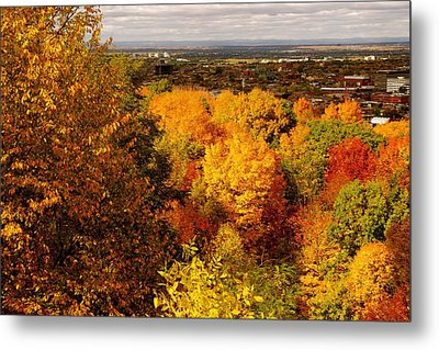 Golden Leaves Metal Print by Jocelyne Choquette