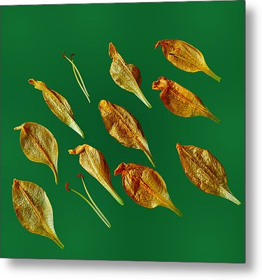 Metal Print featuring the photograph Golden Leaves by Marwan Khoury