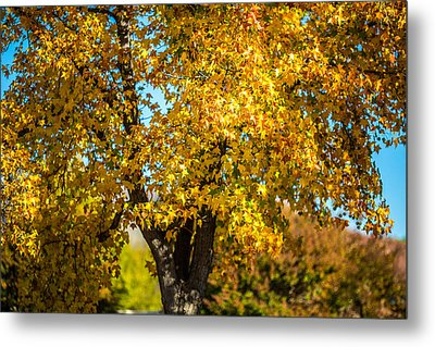 Golden Leaves Of Autumn Metal Print by Mike Lee