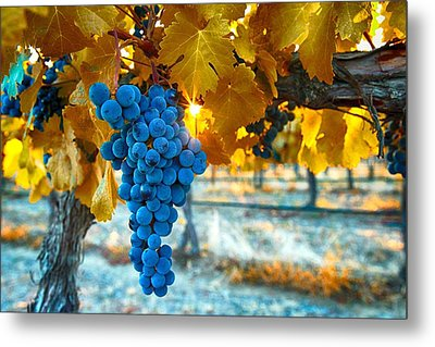 Golden Leaves With Grapes Metal Print by Lynn Hopwood