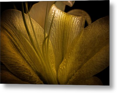 Metal Print featuring the photograph Golden Lily by Dave Garner