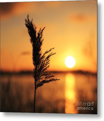Golden Morning Metal Print by LHJB Photography