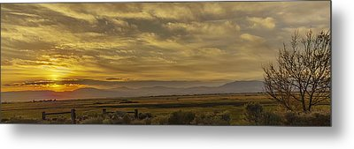 Metal Print featuring the photograph Golden Morning by Nancy Marie Ricketts