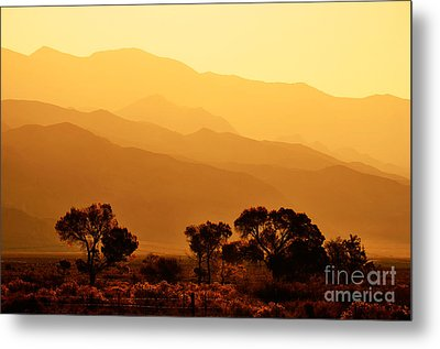 Golden Mountain Light Metal Print by David Lawson
