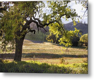 Golden Oaks Metal Print