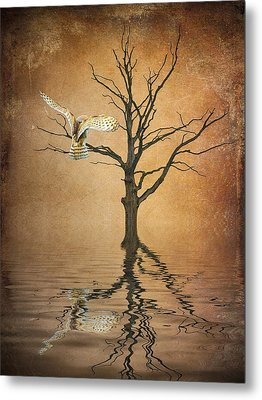 Golden Owl Metal Print by Sharon Lisa Clarke