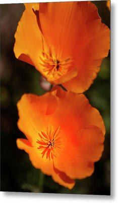 Golden Poppyies Metal Print by Gilbert Artiaga