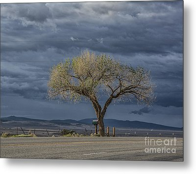 Golden Promise Metal Print by Terry Rowe