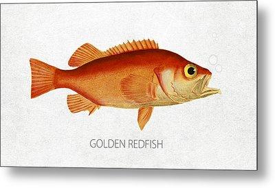 Golden Redfish Metal Print by Aged Pixel