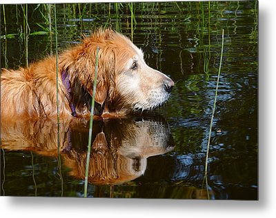 Golden Reflections Metal Print by Sandra Updyke