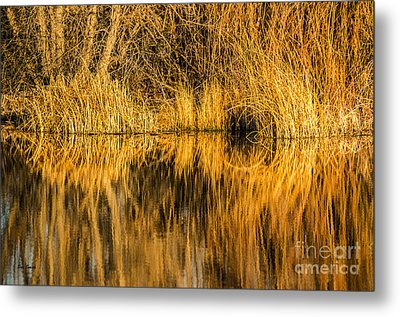 Golden Reflections Metal Print by Sue Smith