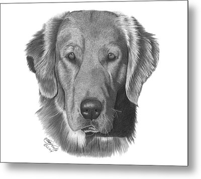 Metal Print featuring the drawing Golden Retriever - 026 by Abbey Noelle