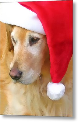 Golden Retriever Dog In Santa Hat  Metal Print by Jennie Marie Schell