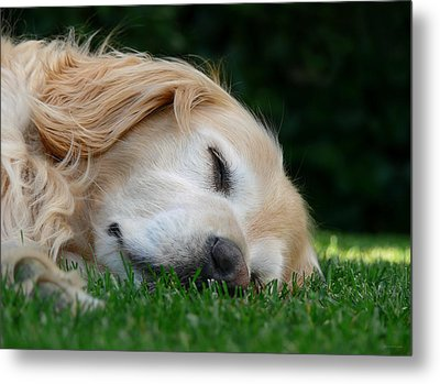 Golden Retriever Dog Sweet Dreams Metal Print by Jennie Marie Schell