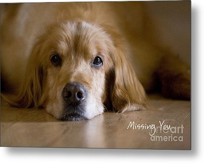 Golden Retriever Missing You Metal Print by James BO  Insogna