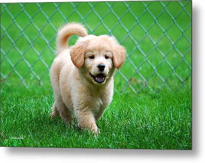 Golden Retriever Puppy Metal Print by Christina Rollo