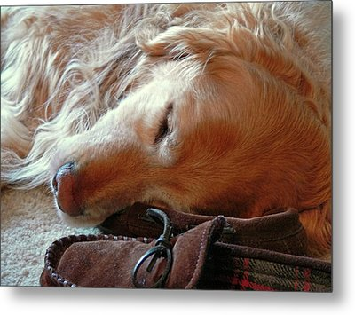 Golden Retriever Sleeping With Dad's Slippers Metal Print by Jennie Marie Schell