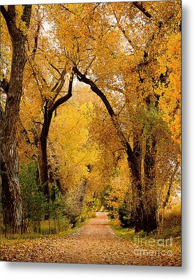 Metal Print featuring the photograph Golden Roads by Steven Reed