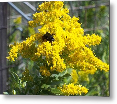Golden Rod Metal Print by Rosalie Klidies