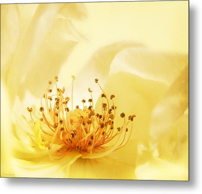 Golden Showers Rose Metal Print