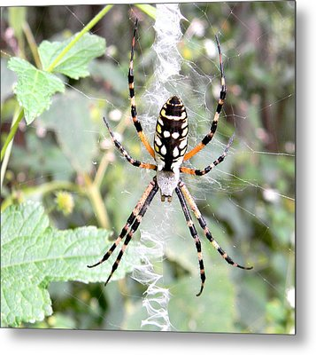 Metal Print featuring the photograph Golden Silk Spider by Jodi Terracina
