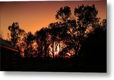 Golden Sunset Metal Print by Rebecca Davis