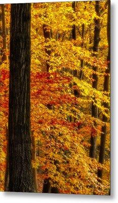 Golden Trees Glowing Metal Print