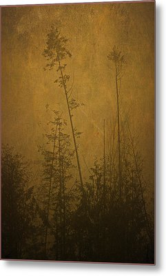Metal Print featuring the photograph Golden Trees In Winter by Peggy Collins